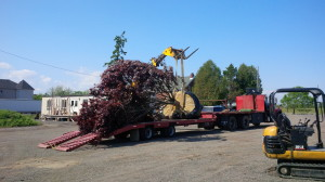 Arrival of the Tree to the yard